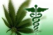 Massachusetts Medical Marijuana Initiative: Question 3 on Nov. 6th Ballot