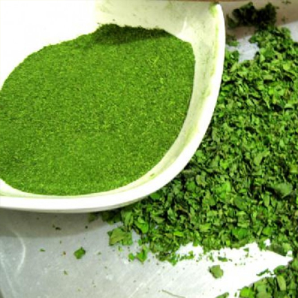 Moringa Direct
