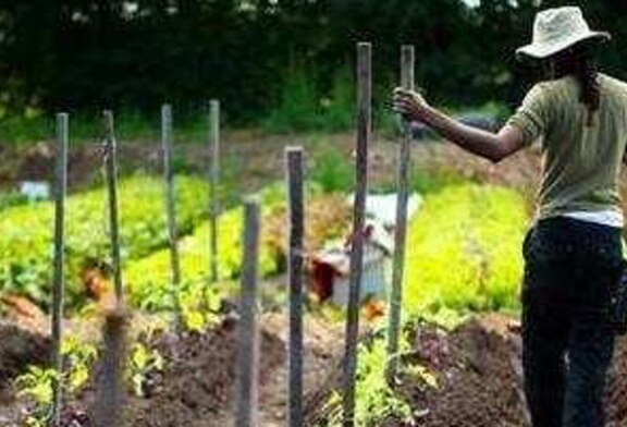 5th Annual Massachusetts Urban Farming Conference